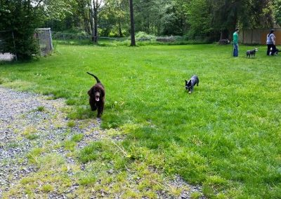 Dog Training near Seattle Academy of Canine Behavior