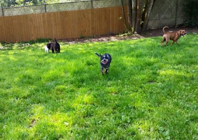 Dog Training near Seattle - Academy of Canine Behavior