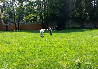 Dog Training near Seattle- Academy of Canine Behavior