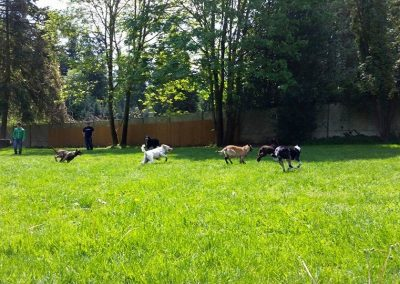 Academy of Canine Behavior- Dog Training near Seattle