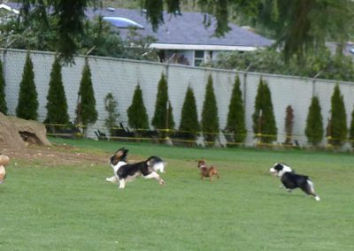 Academy of Canine Behavior Bothell WA - Dog Training, Boarding, Daycare Dog Grooming