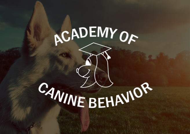 Board and Train Dog Training - Academy of Canine Behavior